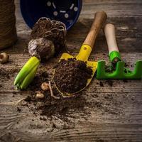 Pflanzen zum Pflanzen und Gartenzubehör