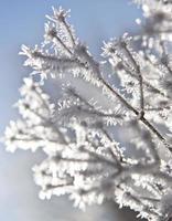 gefrorene Pflanzen