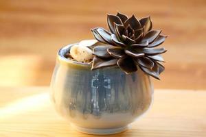 gesunde Zimmerpflanze foto