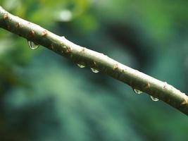 Regentropfen auf Pflanze