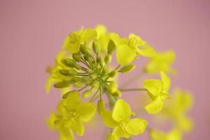 Blumen und Pflanzen foto