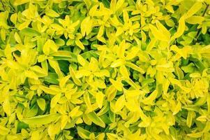 grüne Zierpflanzen