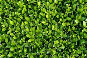 Pflanzenhintergrund foto