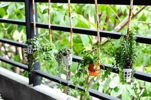 kleines Pflanzendekor foto