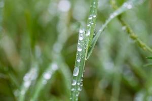 Wassertropfen auf der Pflanze foto