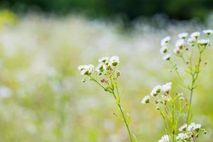 Pflanze unscharfer Hintergrund