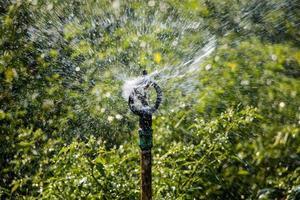 Sprinkler in Chili-Pflanze foto