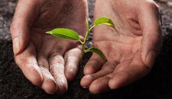 Hände halten grüne Pflanze foto