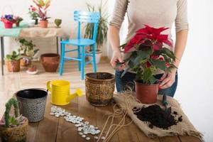 Frau pflanzt eine Blume foto