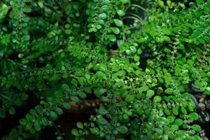 Blätter von Grünpflanzen 2