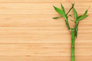 Bambuspflanze über Holztisch foto