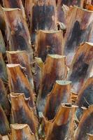 abstrakte Hintergründe von Palmen foto