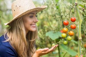 hübsche Blondine, die Tomatenpflanze betrachtet