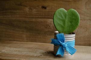 Pflanze in Form eines Herzens