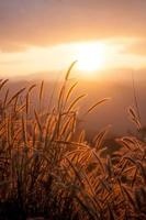 Wildpflanzen bei Sonnenuntergang im Sommer
