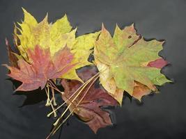 bunte Blätter. foto