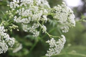Blüte von Pflanzen foto