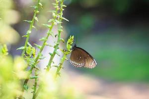 Schmetterling auf Pflanze foto