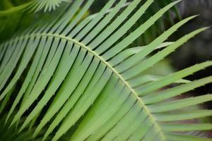 grüne Palmenpflanzenblätter foto