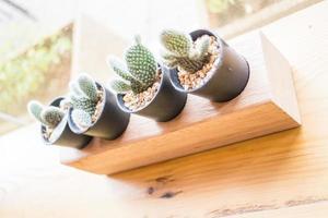 kleine Kaktuspflanze dekorierte Holztisch