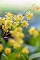bunte Orchideen und Zierpflanzen im Garten foto