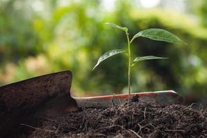 junge Pflanze wächst auf braunem Boden mit Schaufel