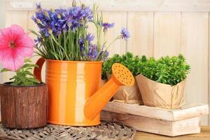 Gießkanne und Pflanzen in Blumentöpfen auf hölzernem Hintergrund