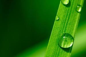 Makrobild von Wassertropfen auf einem Pflanzenblatt foto
