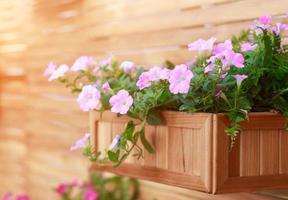 hängender Korb mit rosa Blumenpflanzen an der Holzwand foto