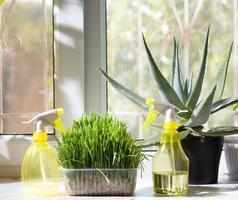 Sprühgeräte und verschiedene heimische Pflanzen im Topf auf der Fensterbank foto
