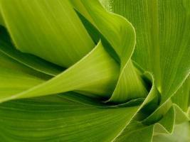 Fragment von Maisdampf mit Blättern foto