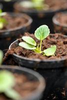 neu verpflanzter Sämling in einem Kindergarten