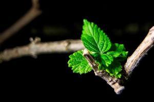 grüne Sprossen