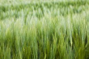 landwirtschaftliches Feld foto