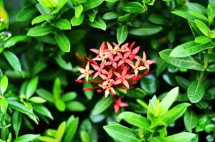 Zierpflanzen foto