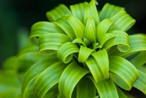 grüne Pflanze foto