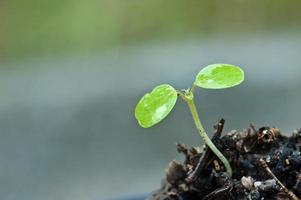 junge Pflanze neues Leben