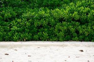 idyllische Pflanze am Strand der Andamanensee foto