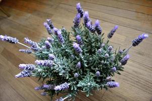 Lavendelpflanze in voller Blüte gegen rustikales Holz foto