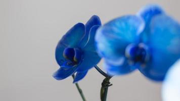 blaue Orchideen-Nahaufnahme foto