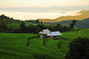 Reisterrassenfelderlandschaft auf dem Berg