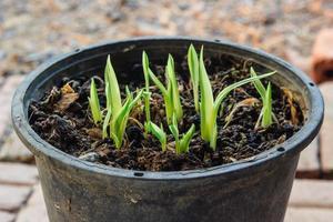junge Pflanze wächst