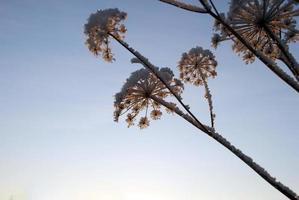 gefrorene Pflanze im Sonnenlicht foto