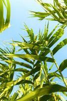 frische grüne Pflanzen im Freien foto