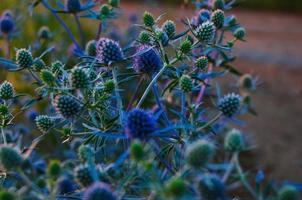 die Pflanze bei Sonnenuntergang foto