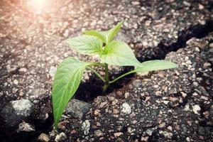 Pflanze wächst aus Riss in Asphalt foto
