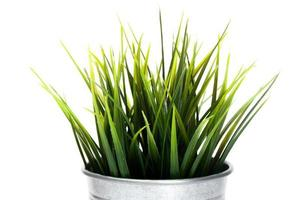 dekoratives Gras im Blumentopf isoliert foto