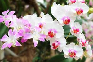 Strauß weißer Orchideenblumen im Garten.