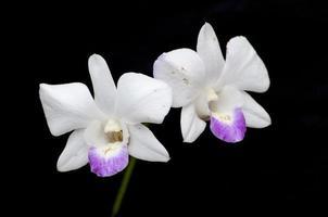 weiße Orchidee auf einem schwarzen Hintergrund