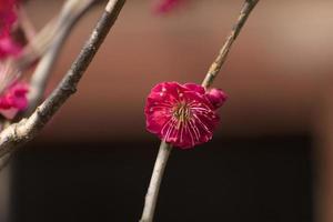 Zweig mit einer roten Blume foto